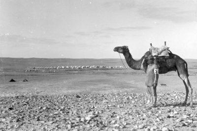 奥斯曼帝国的士兵和他的骆驼
