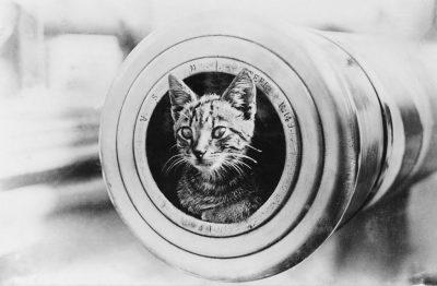 一只猫在英国军舰上扮演吉祥物