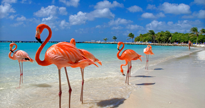 Flamingos Aruba Cruise the Caribbean with a Military and Veteran Discount