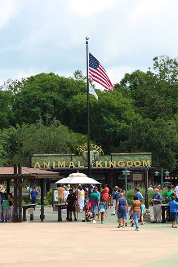 Animal Kingdom American Flag