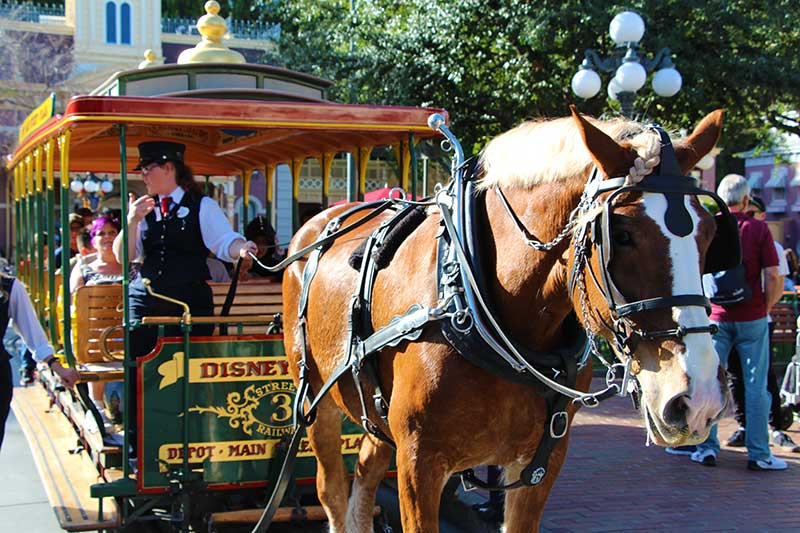 Disneyland Tips and Tricks Horse Drawn Trolly