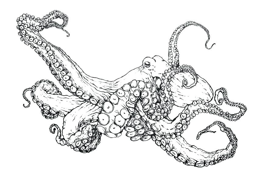 Adult Coloring Page Octopus