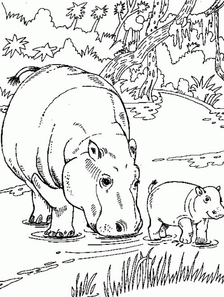 Free Coloring Pages Hippo