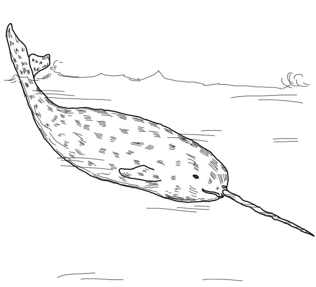 Narwhal Coloring Page Template