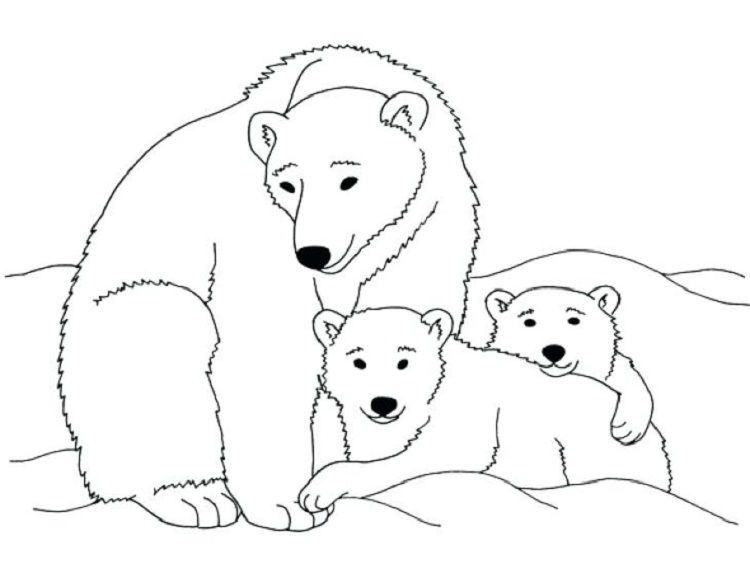polar bear coloring pages to print
