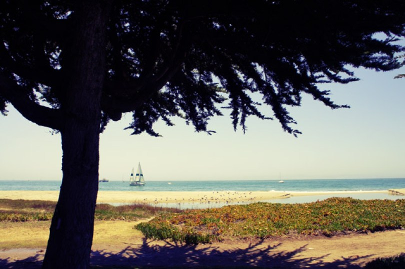 santa-barbara-beachside-tree