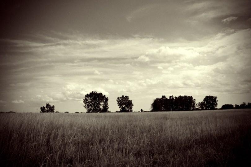 belle-isle-detroit-grass