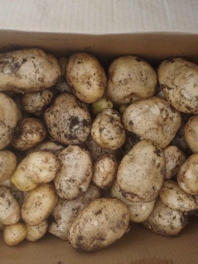 easy crops for beginner gardeners