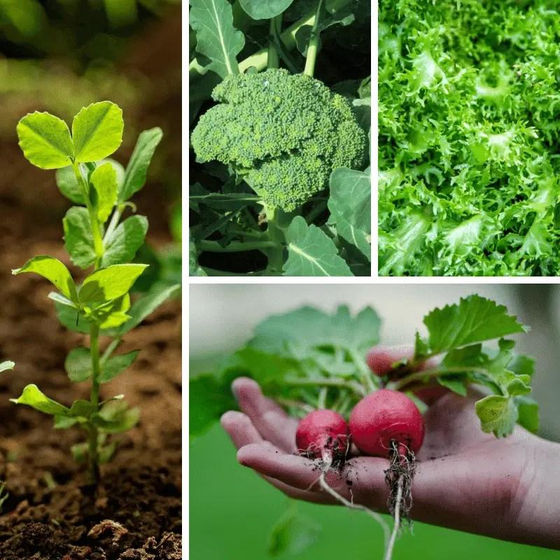 fall garden crop collage