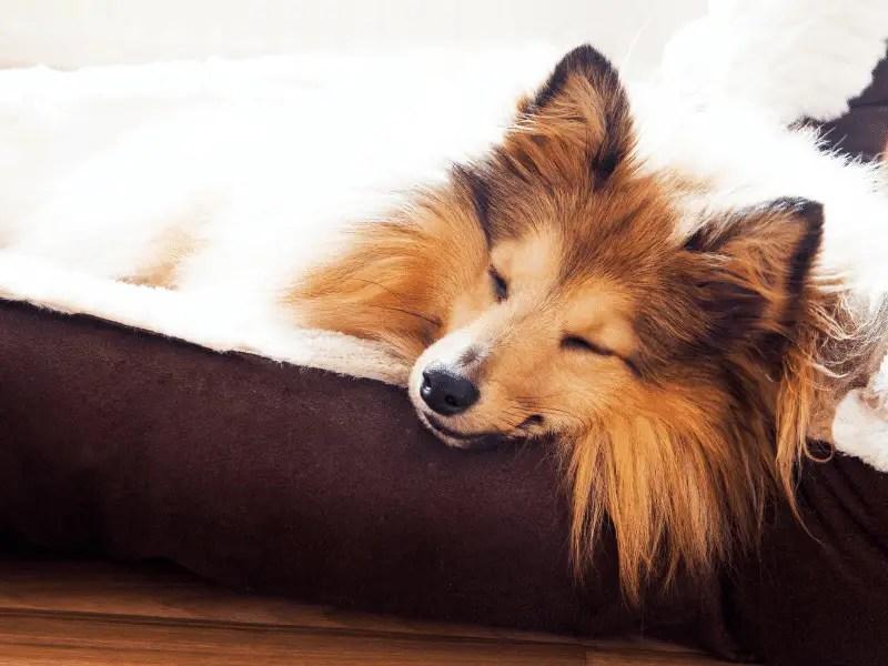eco-friendly dog