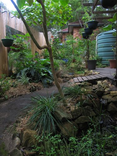 Living close: strata title permaculture - Milkwood ... on Backyard Permaculture Design id=12414
