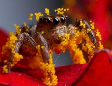 Ragni e polline