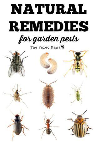 garden pests