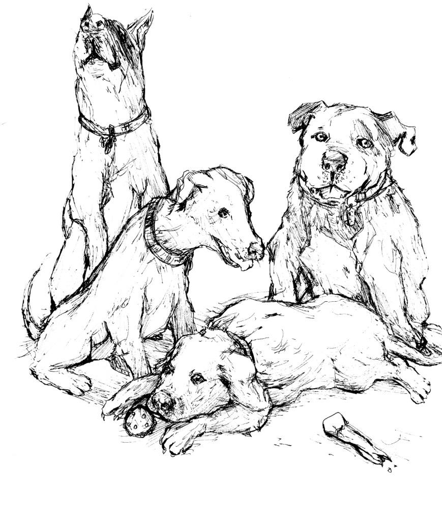Dogs pen drawing by Stephen Sherrange
