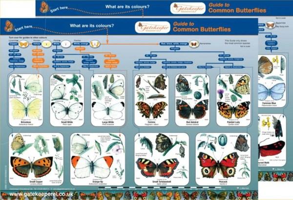 ButterflyFrontBack1500