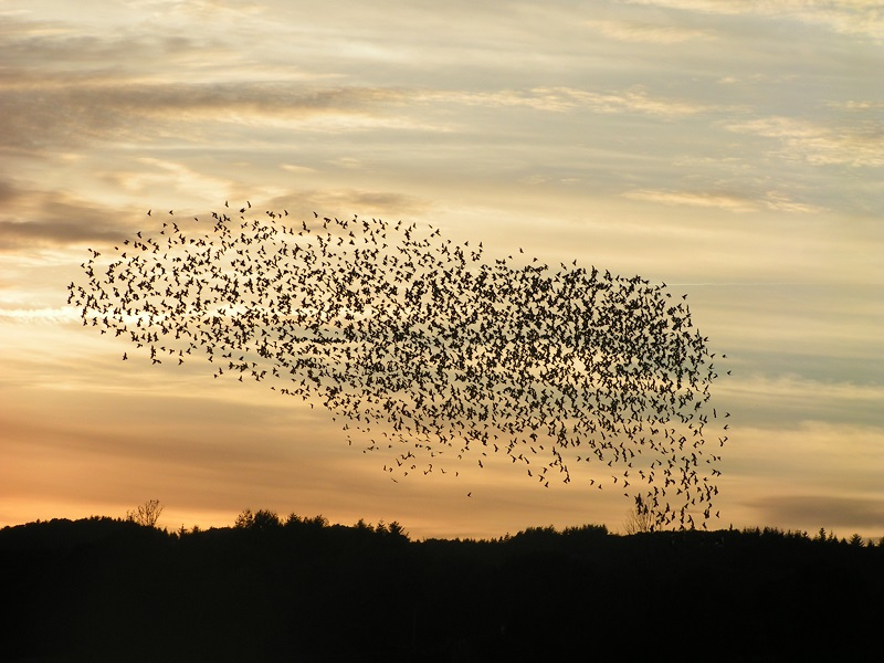 From blog posts to e-book like a swarm of birds
