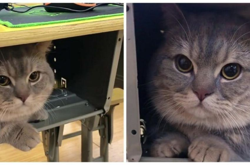 Conoce esta linda historia: Estudiante lleva a su gato  a su aula de clases