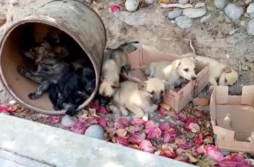 11 perritos fueron rescatados, después de haber sido abandonados en un barril y dos cajas cerca de un cementerio