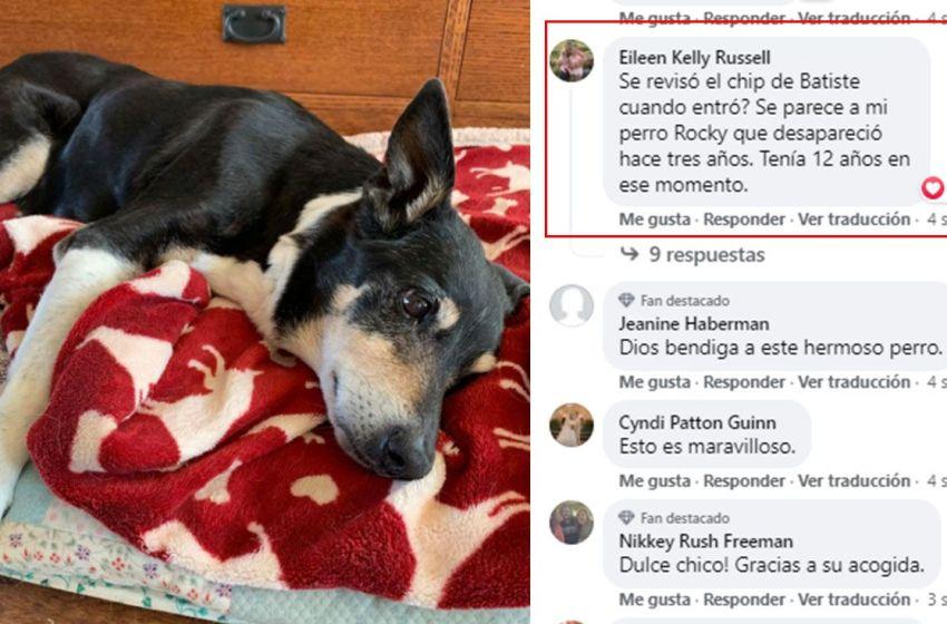 Joven encuentra a su perro perdido hace tres años gracias a un post en Facebook