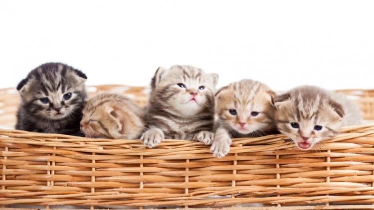 「友人から子猫」の画像検索結果