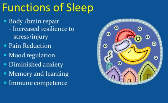 The-Importance-of-Good-Sleep