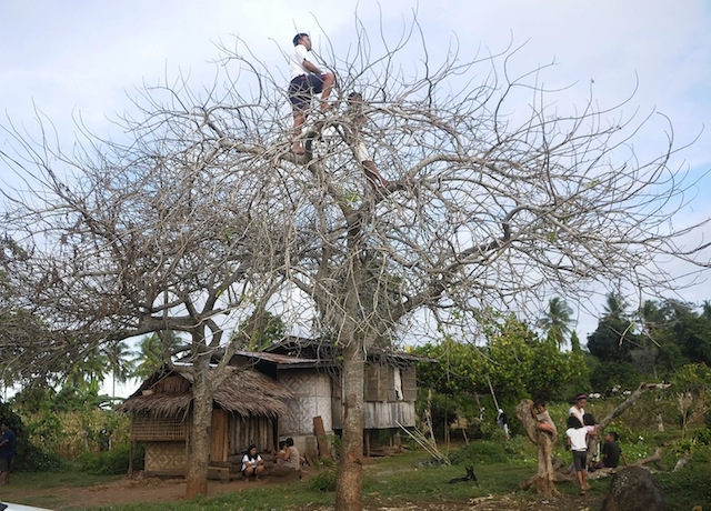 VILLAGE CURIOSITY.  Two residents of Sitio Pagangon, Barangay Gasi in Laguindingan town, Misamis Oriental climb a tree on Dec. 13, 2014 to get a better view of the police and military manhunt against suspects in the December 11 ambush- slay attempt on Iligan's lone representative to Congress, Vicente Belmonte, Jr.  MindaNews photo by Froilan Gallardo