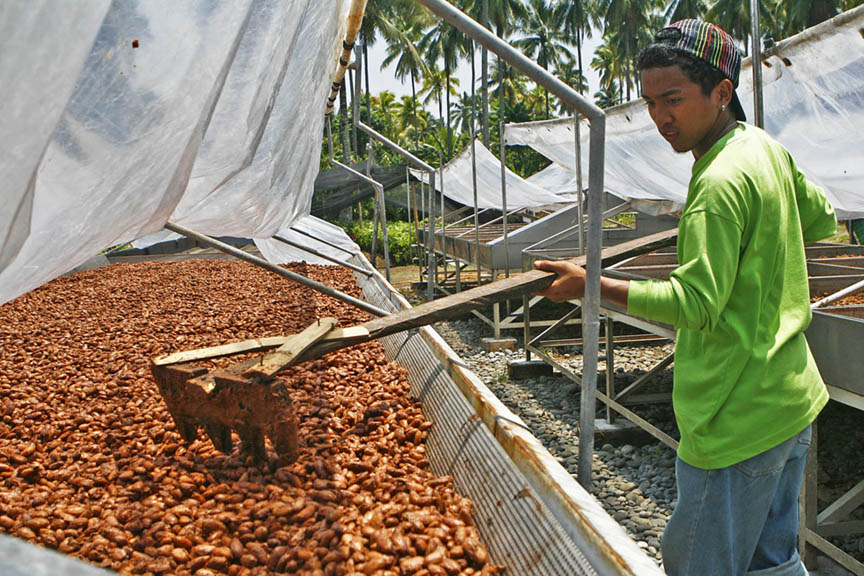 French chocolate firm eyes Davao cacao beans