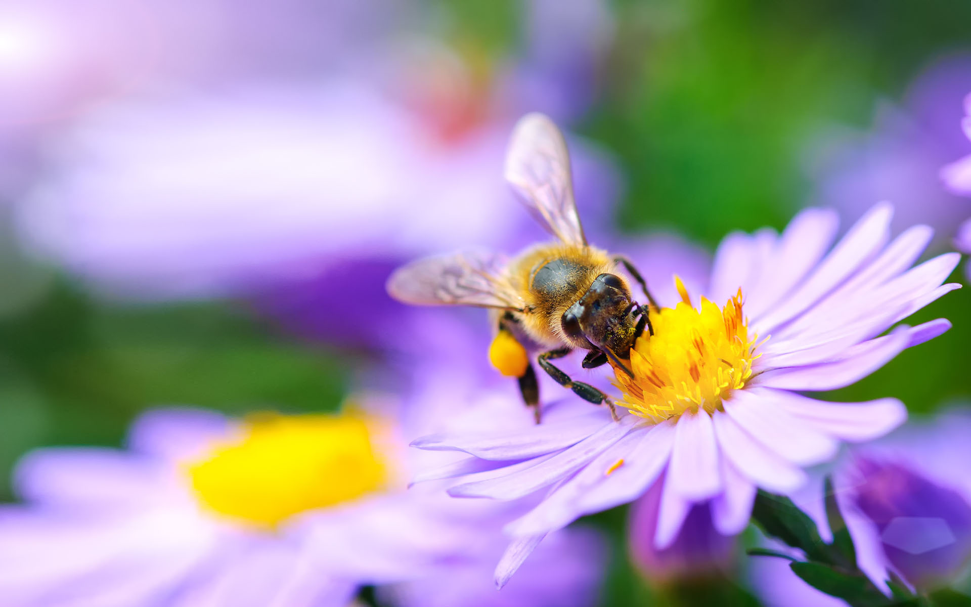 The Mindful Life of Bees - bee gathers the flower. Under rays of sun