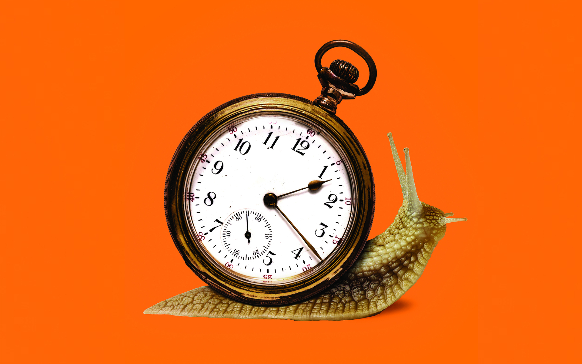 Snail with a stop watch as its shell on an orange background.