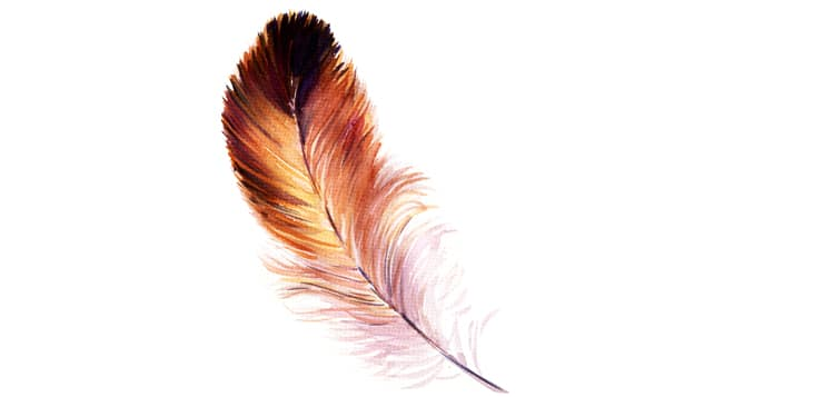 watercolor illustration of a bird's feather