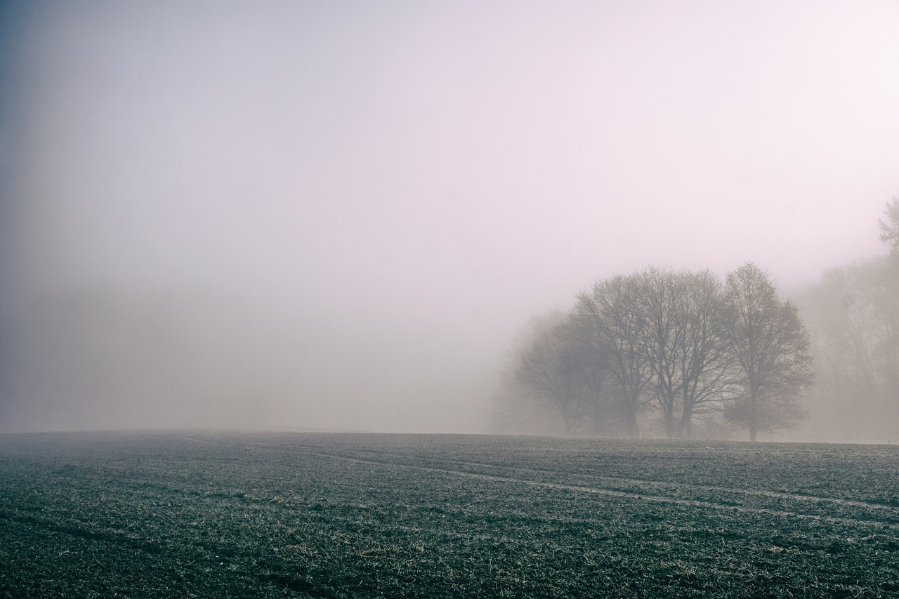 fog, field, countryside