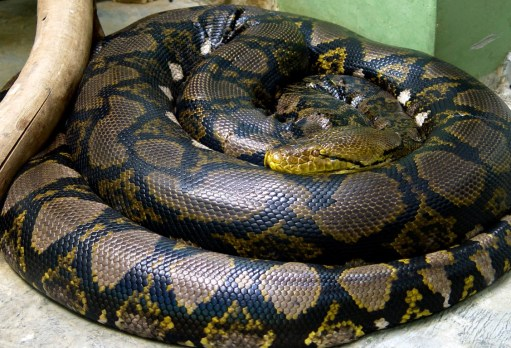 Bobby 2: Python
