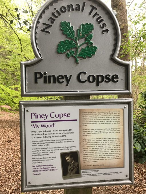 The Bench: Piney Copse.