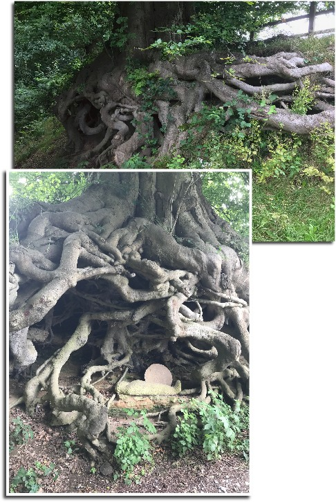 Wintershall Manor: Tree roots become a religious statement.
