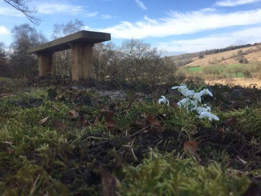 Bench: Snowdrops from Cherrington Lake. Cotswolds.