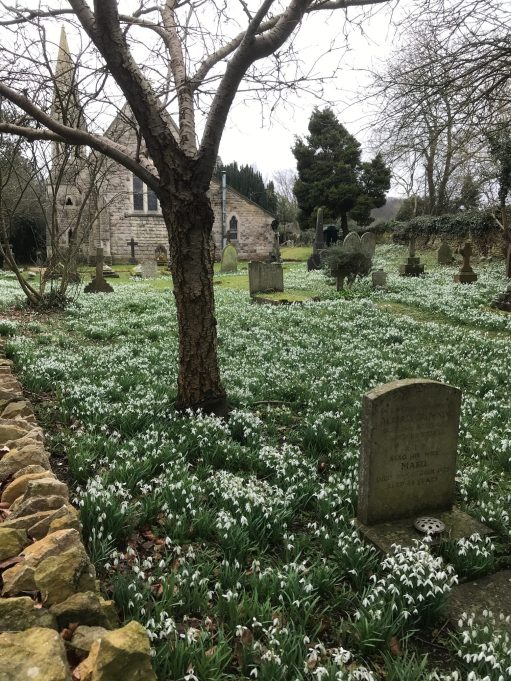 Cotswolds: Snowdrops at St John's, Edge.