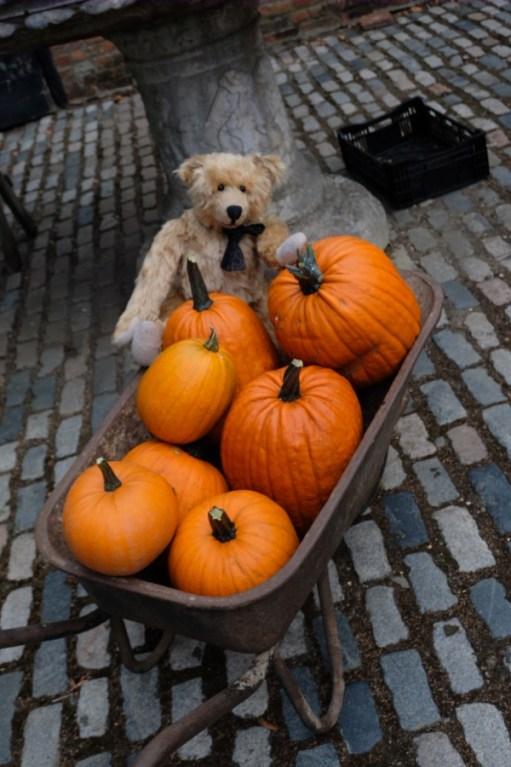 Dahlia Day: Pumpkin Pie?