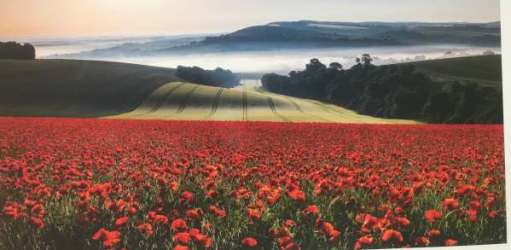 Landscape Photographer. Marie Davey: Field of Red, Houghton, West Sussex, England.