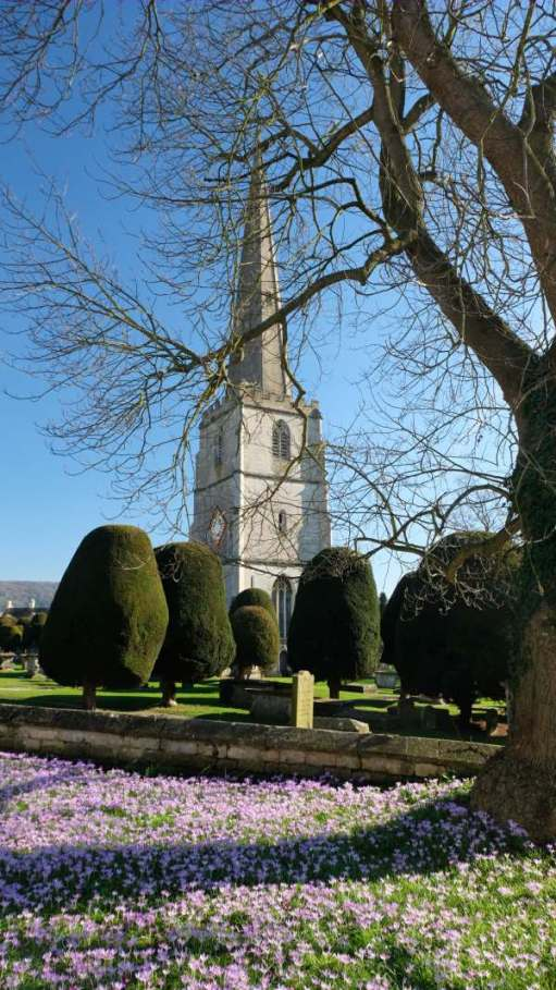 Cotswold Reverie: Church of St Mary Painswick. The church of 99 yews and, last week, thousands of crocuses.