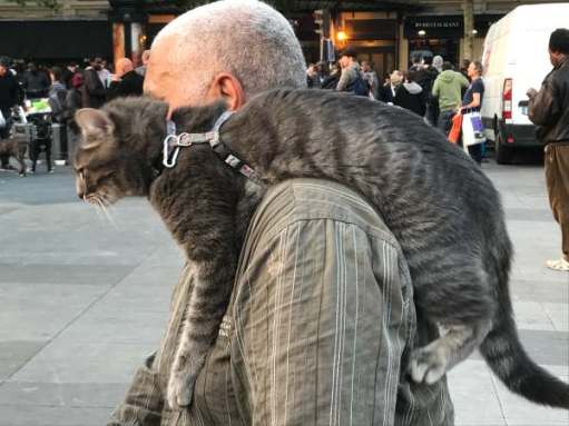 April in Paris. Picture of man walking the street with a cat on his left shoulder!