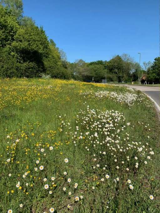 The grass verge, from a bit further back, approaching the roundabout - a veritable reserve of wild flowers including moon daisies and buttercups.