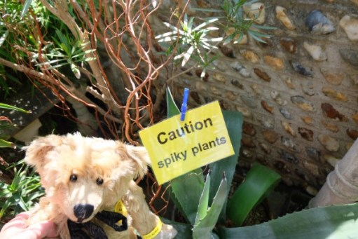 """Bertie by a notice: """"Caution, Spiky plants""""!"""