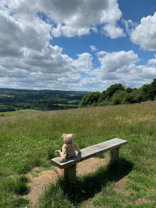 "Bertie sitting on a bench look south west over the Surrey Hills. The bench in inscribed ""Pilgrims come wind come weather""."