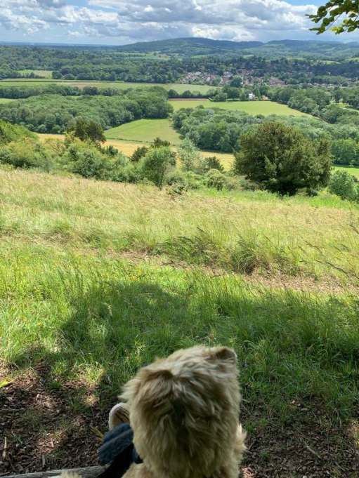 Bertie sat on a bench looking south towards Leith Hill and the Greensand