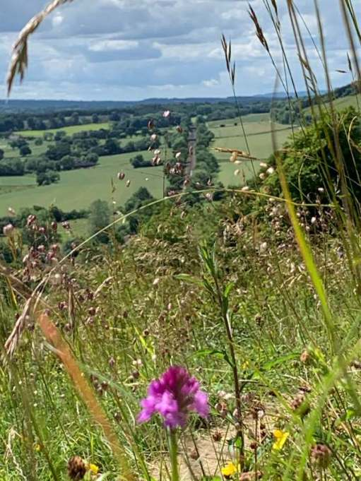 The wild grasses and the North Downs Railway Line. The Flying Scotsman roared through here in June.