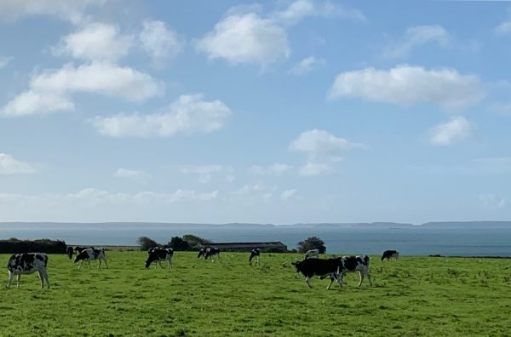 St Brides Bay on a clear, heaven sent day. Skomer to the right. Mainland, including Martin's Haven (of 'serious event' fame) to the left. Just visible almost in the middle, above the last tree to the right of centre, Jack Sound and the lighter grey of Skokholm Island beyond.