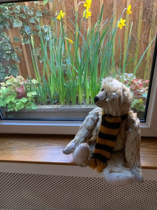 Bertie sat on a window sill with another window box with daffofils in outside.