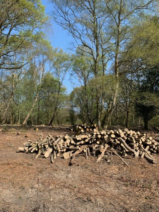 A pile of cut wood in a clearing.