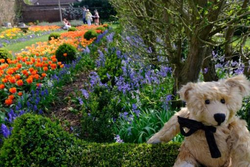 Bertie in Dunsborough Park Gardens with various spring flowers including tulips behind.