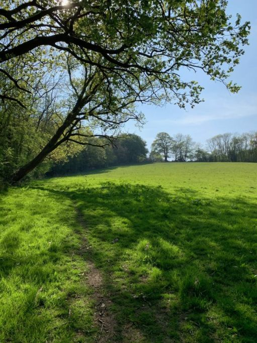 An expanse of open field on the pathway, with the Bluebell Woods on the left.